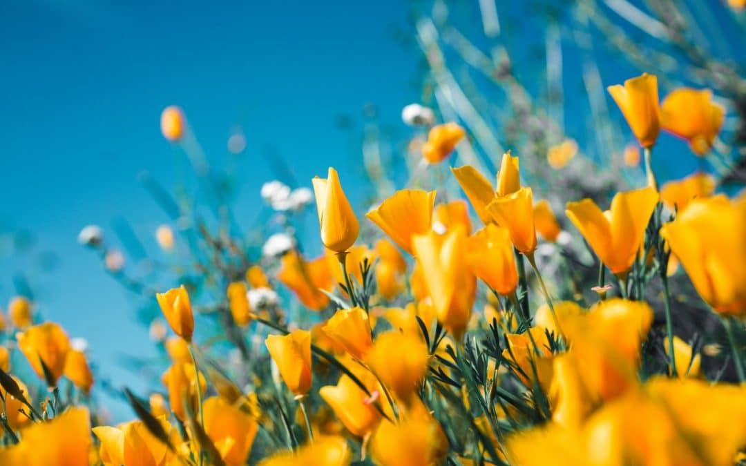 Warum Frühlingsgefühle die Psyche jährlich zum Erblühen bringen
